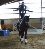 Remus vom RFV Braunschweig in der Pferdeprüfung