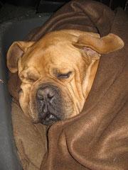 Es ist sooo kalt ! Buddy