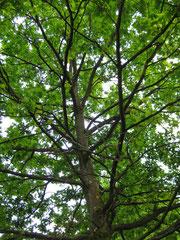 Baum mit Ästen und Zweigen