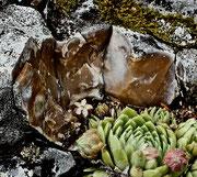 Zerbrochener Stein eines Standorts der Jovibarba bei Spiazzi, 05.08.2011, Ausschnitt, Foto: Roberto Siniscalchi, alle Rechte vorbehalten!