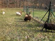 Wo der Rasenmäher nicht hinkommt, auf welligem Boden und bei der Rasenkante - dort sind wir Spezialisten gefragt...