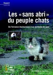 """Cliquer sur l'image pour lire le rapport sur les chats """"sans abris"""""""