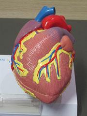 Herzmodell Novartis