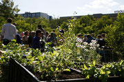 www.prinzessinnengarten.net