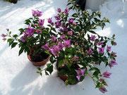 雪の日のサンデリアナ