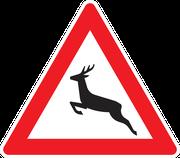 142 Wildwechsel