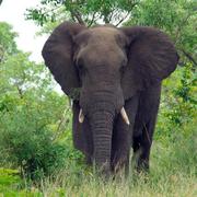 l'elefante in salotto