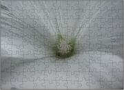 Teil einer Blüte der Trichtermalve