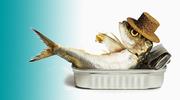 Traumatherapie Osnabrück Gelassenheit in schwierigen Situationen Fisch Sardine in Dose