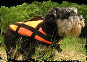 犬用 ライフジャケット