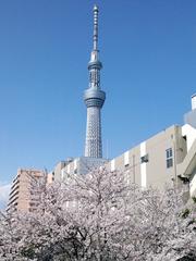 投稿: kohtomoさん、墨田区本所・紅葉橋から(4月4日)