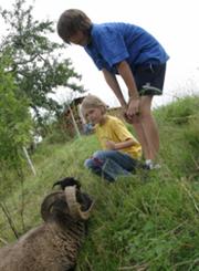 Kinder bei den Schafen