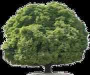 Baum mit großer Krone Schalldruck Vogelvergrämung