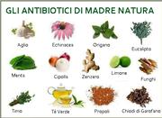 Quali sono gli Antibiotici naturali