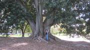 dicker Baum - dünne Gaby