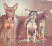 На фото в центре - голубо-подпалая Ежка Голубая Ножка, слева от Ежки - её коричнево-подпалый сын Рыцарь Сказка из Истока от Бони (к-п) . Фото из книги Ж.Чесноковой Монолог о собаке, 1993.