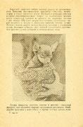 Издание - Пермское областное общество любителей собаководства (ПООЛС), Пермь, 1985 г.