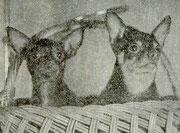 Молли и Ирмиш Фото - из Каталога 5-й Московской городской выставки собак МГОЛС, Москва, 1977 г.