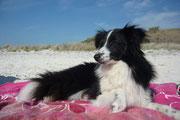 Nella vita di tutti i giorni lei sa essere una tranquilla compagna di spiaggia ma anche una vivace e simpatica amica per gli altri quattro zampe