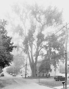 ©Mitch Epstein, Eastern Cottonwood, Sprague Avenue, Staten Island 2011