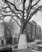 ©Mitch Epstein, American Elm, Eastern Parkway, Brooklyn 2012