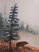 L'ours des Pyrénées, aquarelle sur papier