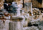 Mein erster Wiedehopf - Griechenland, 2002 (Dia)