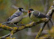 Altvogel und Diesjähriger - Albtrauf, Mai 2021