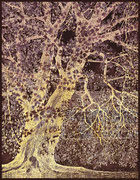 Platane négatif 19,5 x 25 cm