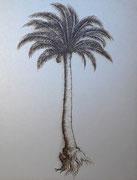 Palmier positif 19,5 x 25 cm
