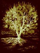 Jeune olivier négatif 19,5 x 25 cm