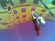 """""""WIEnah""""-Serie (c) De Toys, Oktober 2009 @ Wien"""