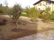 Mise à niveau du terrain et plantation d'arbustes
