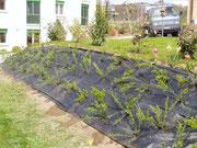 Plantes de talus