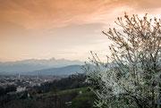 Primavera sulla città © Giuseppe Petenzi  2014