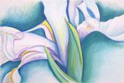 """""""IRIS #3"""", Pastellmalerei auf Papier, privat"""