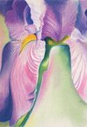 """""""IRIS #6"""", Pastellmalerei auf Papier, privat"""
