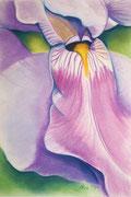 """IRIS #7"", Pastellmalerei auf Papier,"