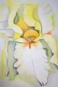 """IRIS #4"", Pastellmalerei auf Papier"