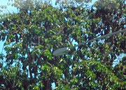 Mitten in der Stadt gibt es mehrer Bäume einer Allee, die interessante Besucher haben