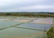 Blick auf die Salzfelder von La Saille zur Salzgewinnung des weltberühmten . . .