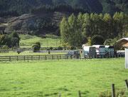 Transporter zeugen von Rindviehhandel und/oder Pferdezucht
