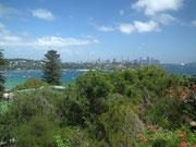 Eine tolle Aussicht auf Sydney mit den vielen Hochhäusern
