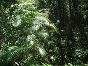Auch da, saftiges üppiges Grün in grosser Vielfalt