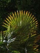 Sogar die Palmen zeigen Sonnenstrahlen