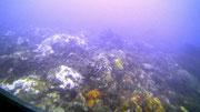 Der Meeresboden ist mit Moosen, Flechten und Korallen bedeckt