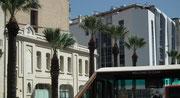 Haushohe Palmen säumen die Hauptstrasse durch die Innenstadt