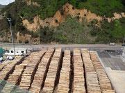 Vor allem Holz für die Papierherstellung in China wird hier verschifft