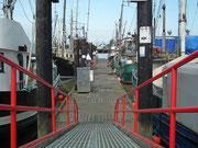 Der riesengrosse Industriefischerei-Hafen . . .