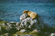 Hot stone geeignet für ein Sonnenbad